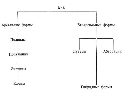 Дендрология (Богданов П..