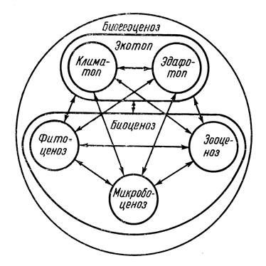 Рис. 3. Схема взаимодействий
