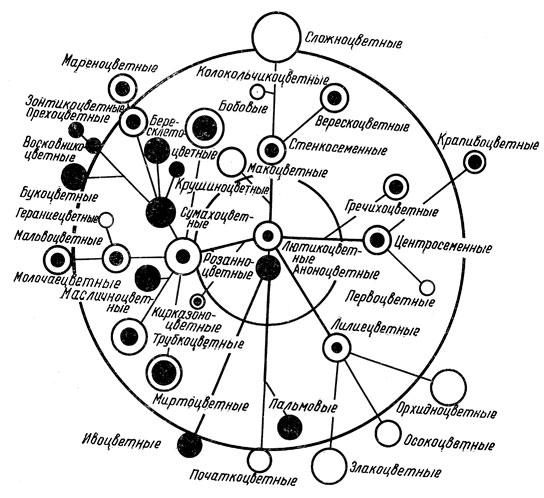 Схема филогенетической системы