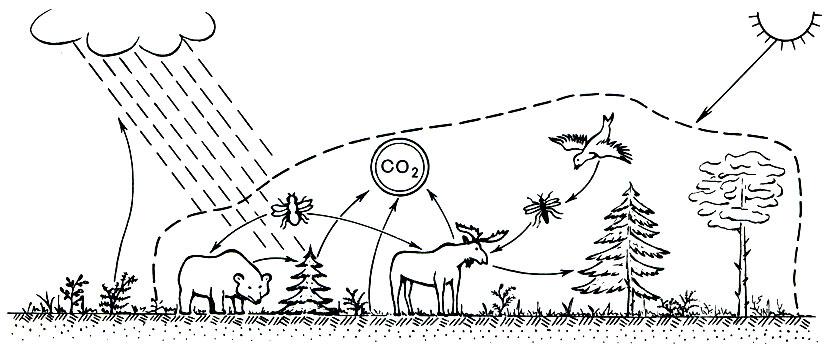 Схема распределения лесной