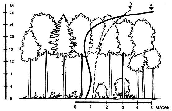 лесу на разных его ярусах;