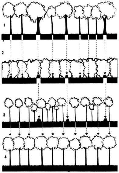 624 Схема сплошной рубки в