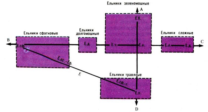 Ординационная схема